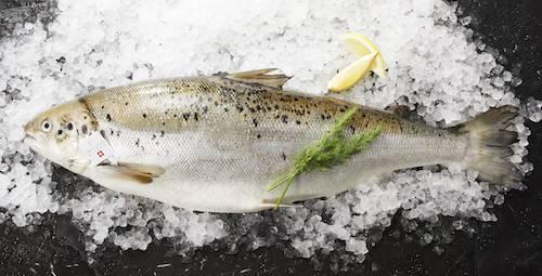 Il salmone crudo è un piacere